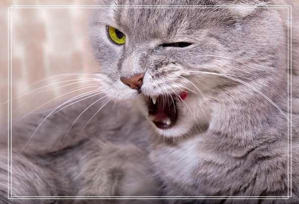 给流浪猫猫咪一个家,把它当宠物