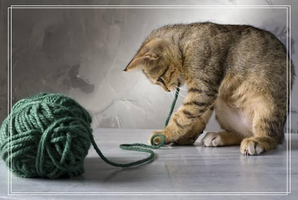 新「图文推荐」网购宠物猫咪的一些注意问题?