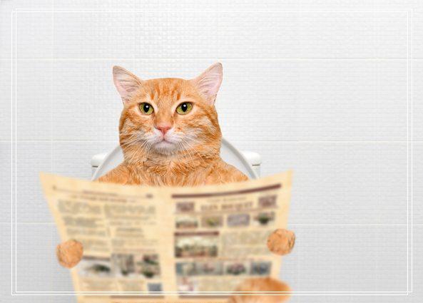 宠物猫之伯曼猫伯曼猫图伯曼猫好养吗
