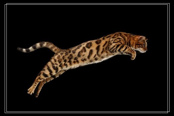 猫砂使用时怎么让猫咪觉得舒适?如何快速教会猫用猫砂