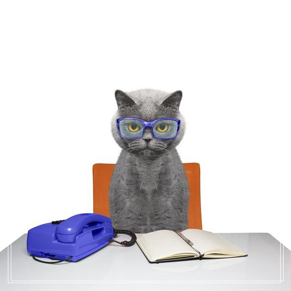埃及猫价格多少钱的图片
