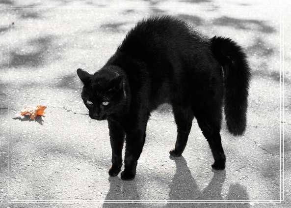 虎斑猫日常护理要注意什么?虎斑猫洗澡和日常「组图」清洁方法