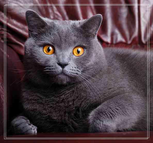哪些猫咪适合年轻白领饲养与图文