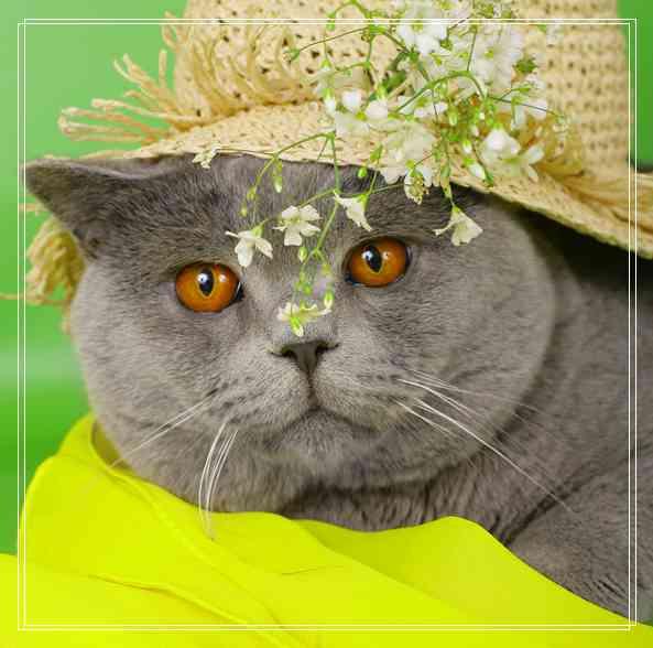 猫粮更换时要注意什么?要经常换吗