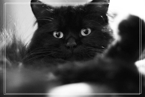 怎样照顾孤儿猫 天生小猫怎么照顾