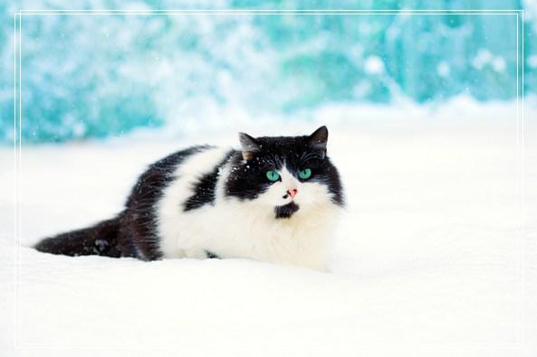 猫咪的特性