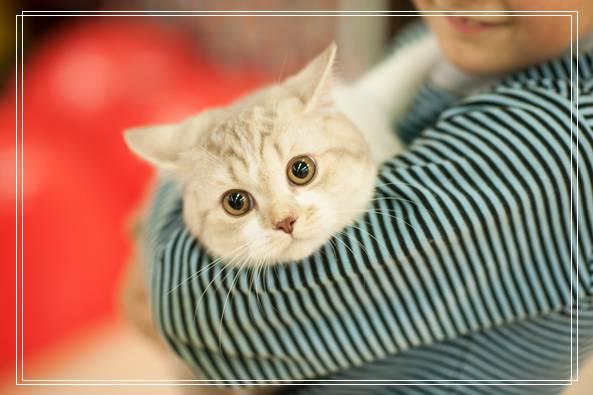 可爱的猫咪知识大全