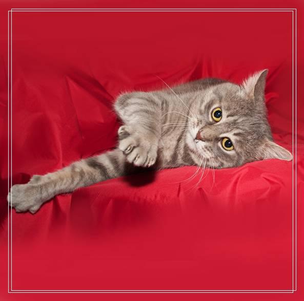 幼猫的护理和喂食注意事项有哪些 流浪猫鲍勃图片