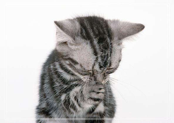 家有猫咪之新生儿进家前准备