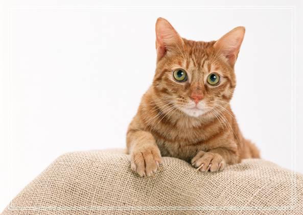 幼猫的健康表现有哪些方面 喜玛拉雅猫