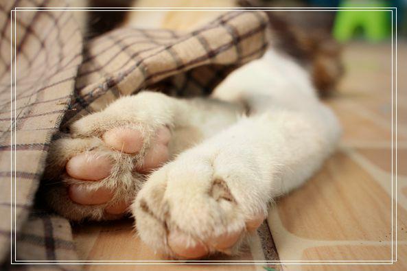哺期的猫咪需要注意什么?