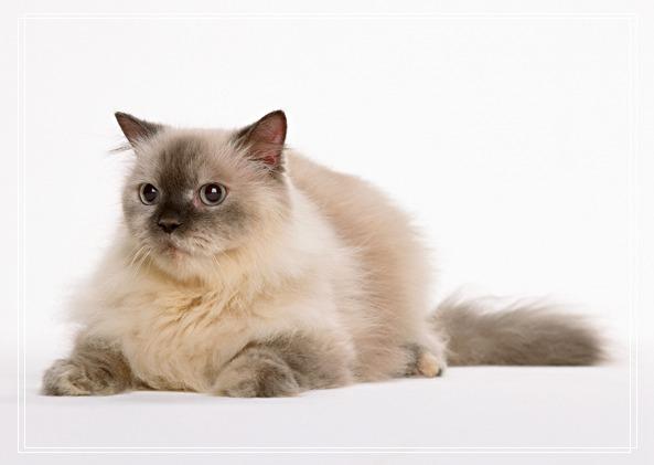 爱猫猫咪人士常犯十种错误