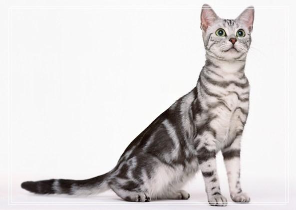 影响猫咪上厕所的因素有哪些 大小便