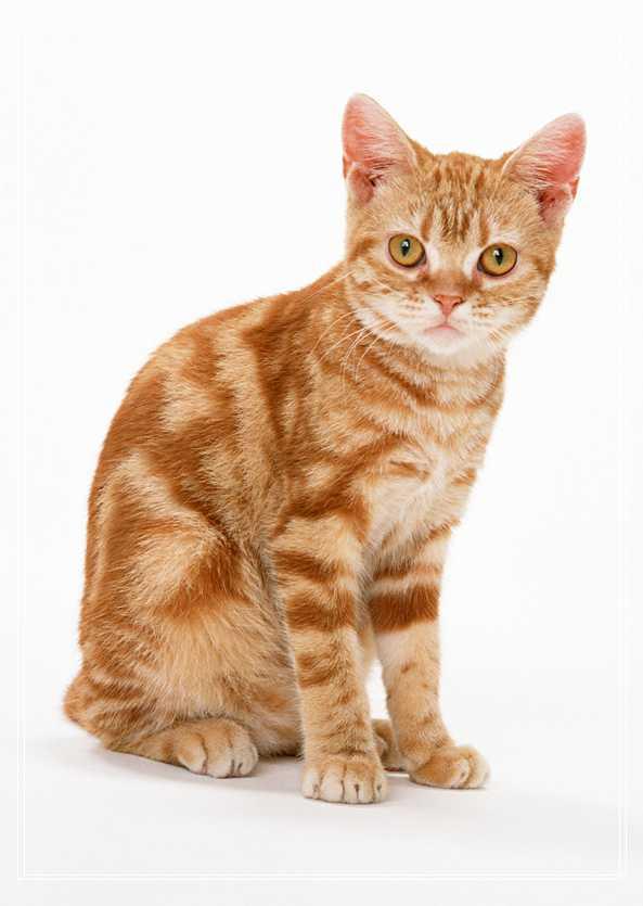 小猫咪一直叫怎么办? 所有猫的品种及图片