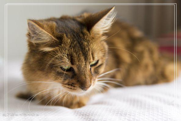 猫咪修剪帅气发型小秘诀 猫多大可以生小猫