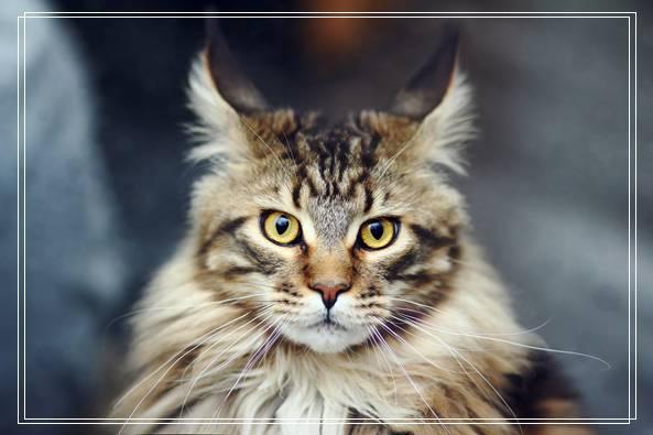 母猫食亲仔猫的原因之如何照顾小猫 母猫不照顾小猫