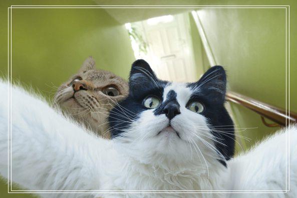 小猫猫咪的生活习性样子大揭秘