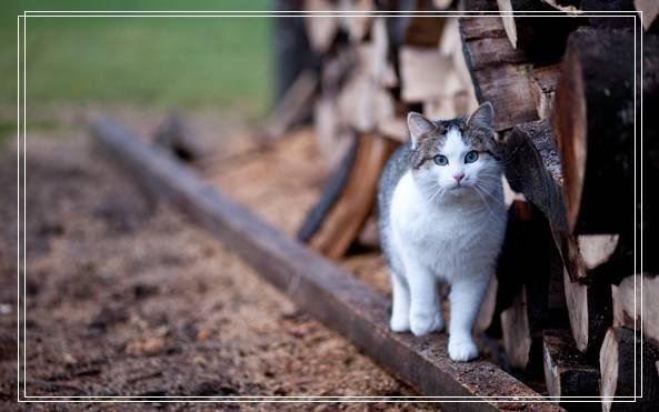 夏季猫咪饲养管理注意事项有哪些的图文推荐