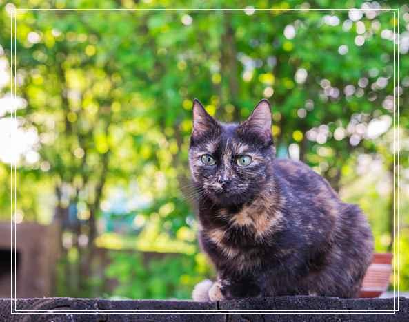 流浪盲眼猫 用爱与勇气获真命猫奴 阳江宠物网站