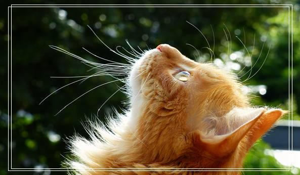 2020第九届成都国际宠物博览会 重庆宠物网站
