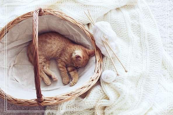 28岁长寿店猫初二离世 粉丝不舍祝福一路走好