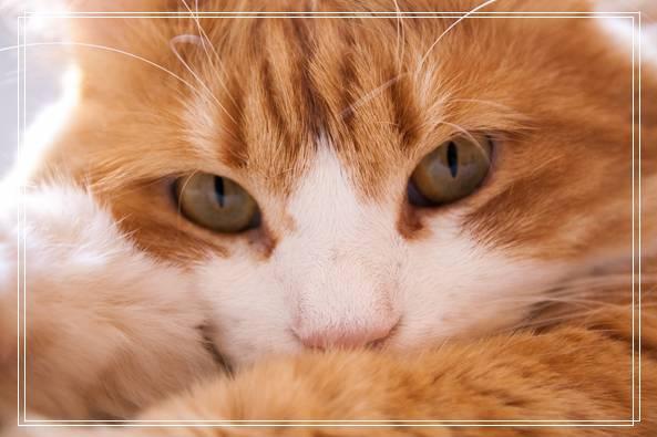 主人过世猫咪被丢街上遭受车祸性格依然超亲人 昭通宠物网站