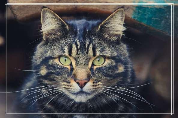 爱猫情侣想收养第三只猫 意外被一只橘喵吉拉吸引