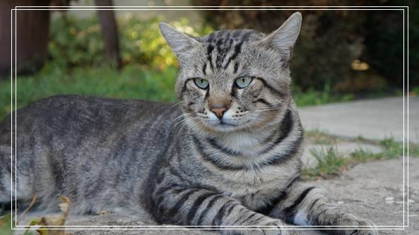 猫咪训练方法,如何让猫咪听话的技巧