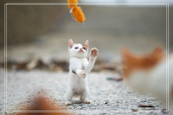 女子喂食弃猫六年 终于猫咪卸下警戒成功收编 益阳宠物网站