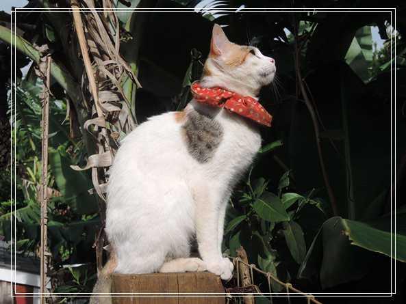 2014年双手捧着臭脸猫 2019年只剩空空一双手 香港宠物托运
