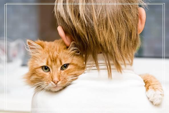 没有钱还敢养猫?月薪几位数才能养得起猫呢? 岳阳宠物网站