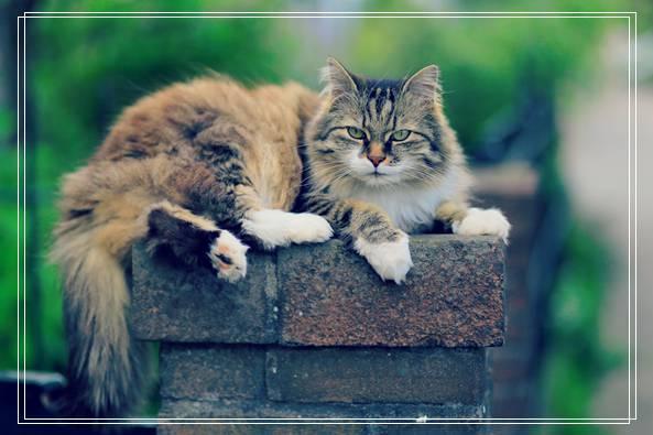 「图文推荐」可爱的猫咪知识大全_猫咪的资料,看看你了解几个?
