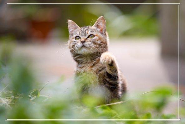 塞乃植物只要听到2个关键字 会被唤醒讨摸摸 台州宠物网站