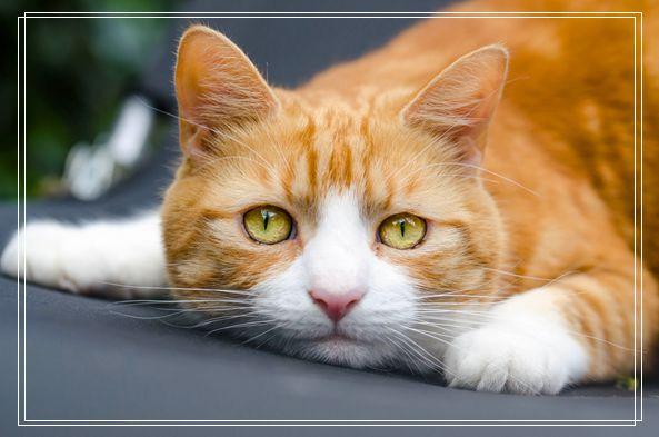 你真的会挑猫粮吗?教你选国产放心的猫粮品牌 东营宠物网站