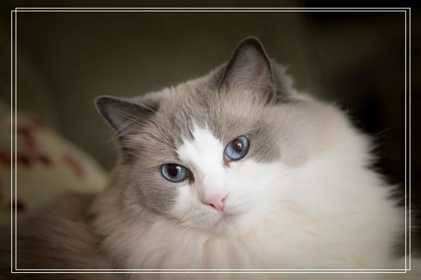 18岁猫被家人弃养 在收容所幸遇真命猫奴 宠物小常识