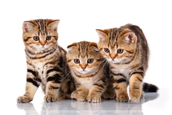 爱猫得给它好营养WOWO猫咪营养膏当喵星人的健康管家