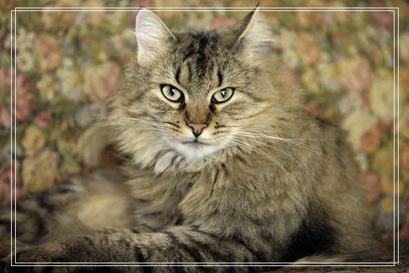 2月大幼猫遭剖皮外翻能见骨 虐猫凶手竟是为70岁的老人 好听宠物名字