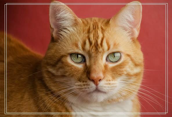 受伤野生动物不停哀嚎 动保员紧急为白鼻心救援 温州宠物网站