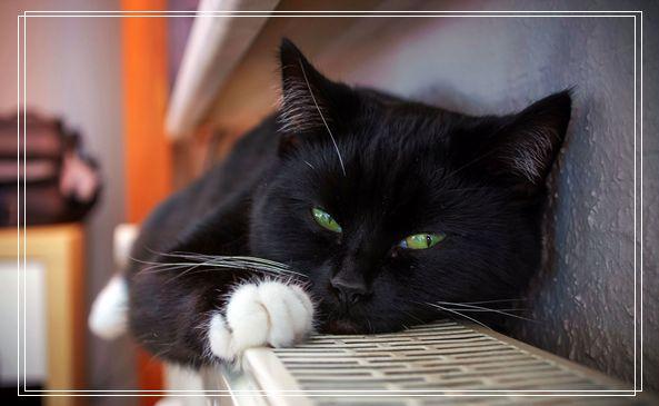 见到瘫痪小猫 阿拉斯加母爱爆棚霸气抱怀中 柳州宠物网站
