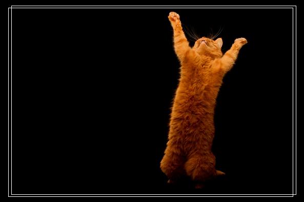 猫咪舔毛舔到秃 为什么猫咪那么爱舔毛? 石家庄宠物网站
