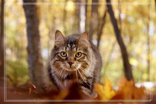 早出晚归的程序员如何在一个租的12平的小房间里养一只猫? 嘉兴宠物网站大全