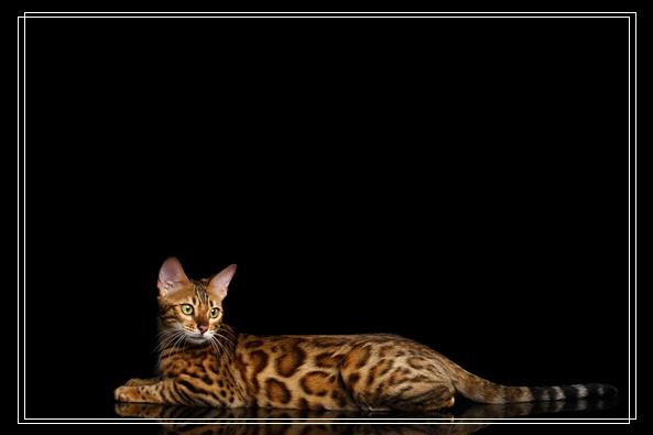 200只猫惨遭 猫死塞爆冰箱 虐猫房间曝光 宠物鸟的种类