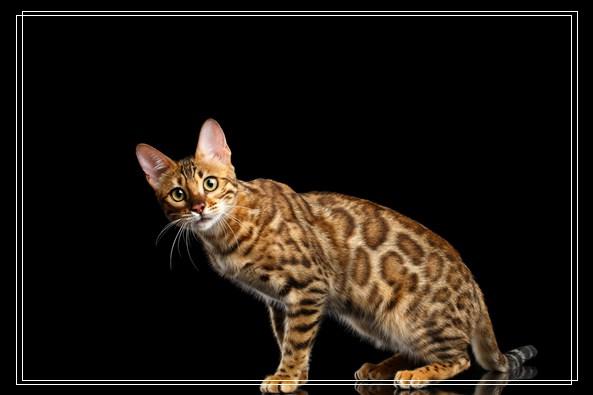 初生的猫咪每天应该吃多少?刚出生的猫咪怎么喂养
