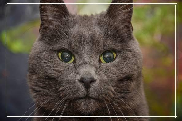 16岁老猫姐妹躲过安乐死 找到新家继续幸福猫生 365宠物用品折扣店