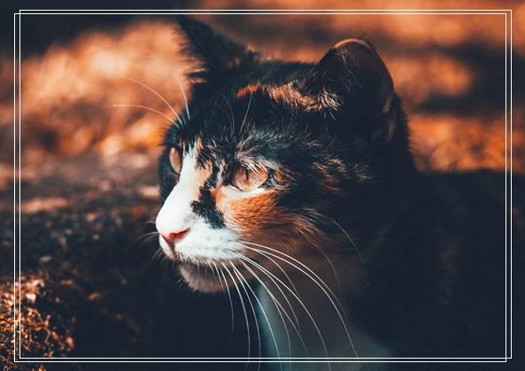 19公斤橘猫让人惊呆 因超胖身型一度声名大噪! 深圳 宠物市场