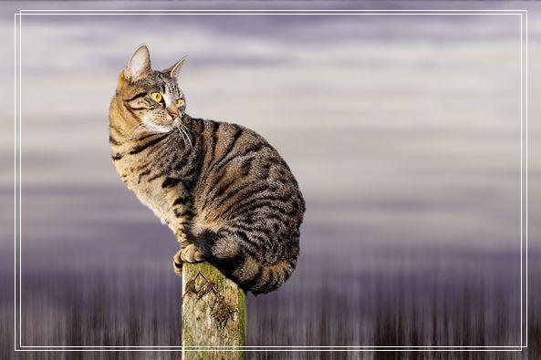 遛猫也需要遵守这些规则 牵绳和封闭活动空间 一个都不能少 潍坊宠物网站
