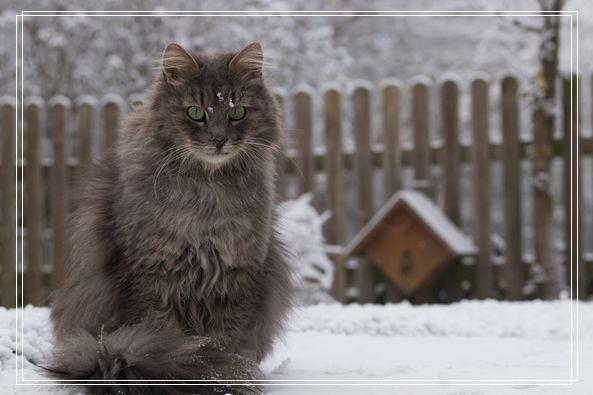 抱龙猫也要注意姿势「组图」