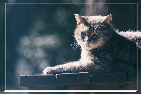 猫咪训练听话方法大全