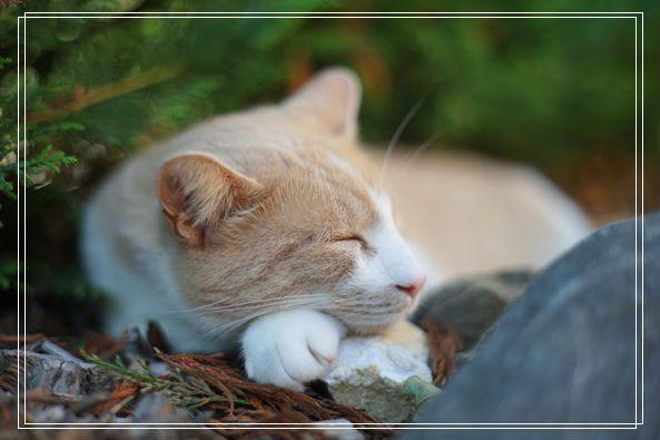 猫咪多久洗一次澡合适 所有猫的品种及图片