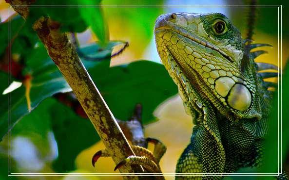 不同种类龟龟混养注意事项 乌龟眼睛肿了